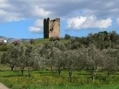 02_ruins-on-a-green-grass-hill-with-almond-trees-and-bushes-and-a-blue-sky-on-an-island-called-evia-in-greece